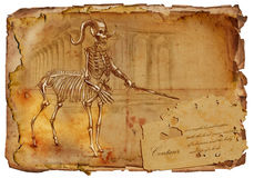 Legendary animals and monsters: CENTAUR Stock Image