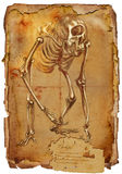 Legendary animals and monsters: CYCLOPS. Illustration of a series of legendary animals and monsters (skeleton): CYCLOPS. An hand drawn and painted full sized Stock Image