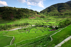 Legendary rice terraces Stock Photos