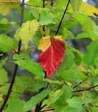 Legends of autumn Stock Image
