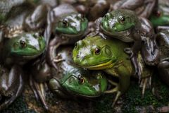 Leger van groene samen gestapelde kikkers royalty-vrije stock foto's