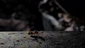 Legermieren die op hout in tropisch regenwoud kruipen stock videobeelden