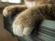 Legged Furry Tabby Cat. The Legged Furry Tabby Cat royalty free stock images