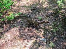 Legged herbivoor dinosaurus twee in bos royalty-vrije stock foto