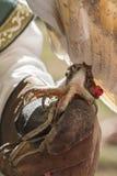 Legged owl tame Stock Photography