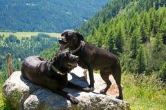 Leggen de labrador zwarte honden op een rots in de bergen Royalty-vrije Stock Afbeeldingen