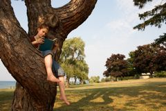 Leggendo in un albero Fotografie Stock