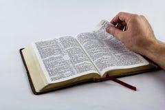 Leggendo una bibbia sul fondo bianco Fotografia Stock