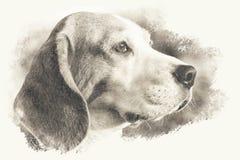 Leggermente immagine tonificata seppia artistica di una testa di cane del cane da lepre royalty illustrazione gratis