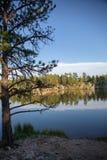 Legion sjö Custer State Park arkivfoton