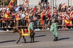 Legionarios y la cabra acarician marchar en el ejército español P del día nacional Fotografía de archivo libre de regalías