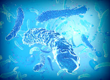 Legionella bacteria. Microscopic view of legionella bacteria Royalty Free Stock Images