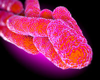 Legionella Pneumophila Bacteria, artwork Royalty Free Stock Photography
