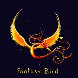 Legless bird of paradise Royalty Free Stock Images