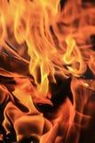 Legna da ardere bruciante della betulla Immagini Stock