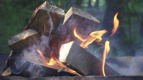 Legna da ardere bruciante su fuoco di campeggio durante la vacanza estiva sulla natura video d archivio