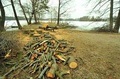 Legna da ardere dal lago Galve, Lituania Fotografie Stock