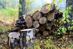 Legna da ardere nella foresta immagini stock