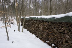 Legna da ardere winterly in foresta Fotografia Stock