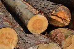 Legna da segare per produrre legname per tutti gli usi Fotografie Stock
