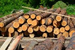 Legna da segare per produrre legname per tutti gli usi Immagini Stock Libere da Diritti