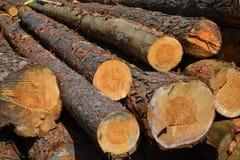 Legna da segare per produrre legname per tutti gli usi Immagini Stock
