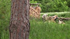 Legnaia di legno del nead del lavoratore di taglio agricolo dell'uomo in pieno di legna da ardere Fotografia Stock Libera da Diritti
