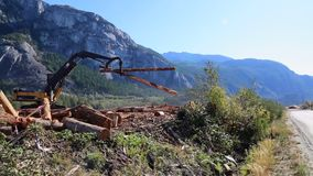 Legname commovente d'elaborazione di legno del sollevatore del legname del sito stock footage