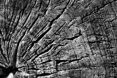 Legname del ceppo dell'estratto del nero della foresta del blocchetto della billetta Fotografia Stock Libera da Diritti