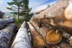 legname della pila Immagini Stock Libere da Diritti