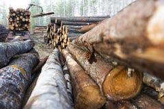 legname della pila Immagine Stock Libera da Diritti