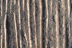 Legname di legno in ghiaia Immagine Stock