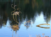 Legname galleggiante ad alta marea Fotografia Stock Libera da Diritti