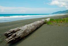 Legname galleggiante bianco sulla spiaggia nera Fotografia Stock Libera da Diritti