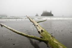 Legname galleggiante Cantilevered sulla costa olimpica Fotografia Stock