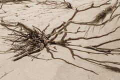 Legname galleggiante della spiaggia Immagini Stock