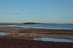 Legname galleggiante di bassa marea Fotografia Stock Libera da Diritti
