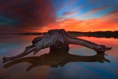 Legname galleggiante durante l'alba vibrante Fotografie Stock Libere da Diritti