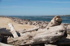 Legname galleggiante e ceppi impilati su sulla spiaggia davanti al molo di TIllamook Fotografia Stock Libera da Diritti