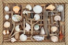 Legname galleggiante e mare Shell Abstract Immagini Stock