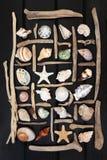 Legname galleggiante e Shell Abstract Fotografie Stock