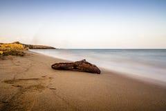 Legname galleggiante su una bella spiaggia Fotografia Stock
