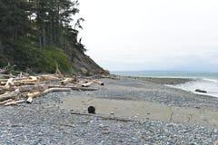 Legname galleggiante su una spiaggia, penisola olimpica Immagini Stock Libere da Diritti