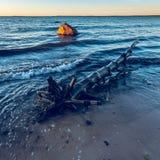 Legname galleggiante sulla spiaggia al tramonto Immagini Stock