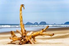 Legname galleggiante sulla spiaggia alla costa dell'Oregon dell'allerta del capo Immagini Stock