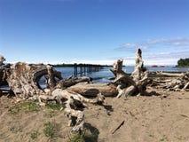 Legname galleggiante sulla spiaggia, Fraser River, Richmond, BC fotografia stock