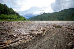 Legname galleggiante in un fiume Fotografia Stock Libera da Diritti
