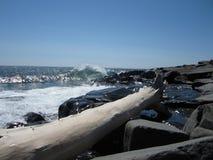 Legname galleggiante Wave Fotografia Stock