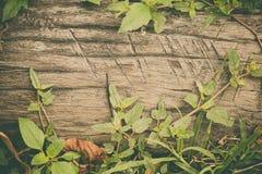 Legname grezzo, recinto a stecche di legno o fondo della parete dell'assicella con il gree fotografia stock libera da diritti