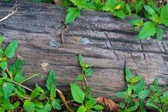 Legname grezzo, recinto a stecche di legno o fondo della parete dell'assicella con il gree fotografia stock